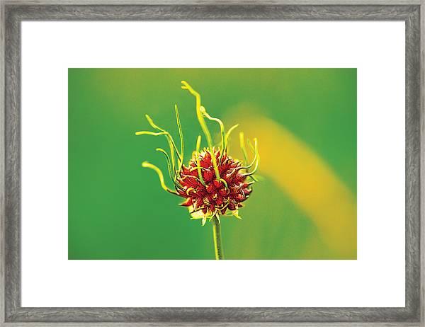 Medusapod Framed Print