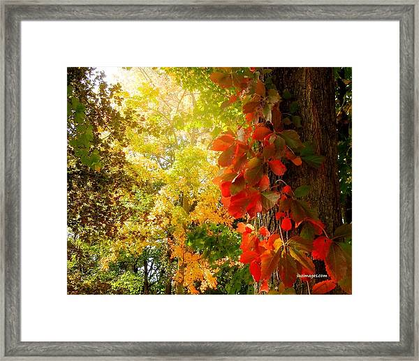 Minnesota Jungle Framed Print