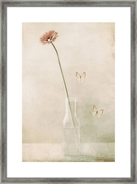 Miss Daisy Framed Print