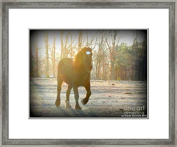 Morning Frost Framed Print