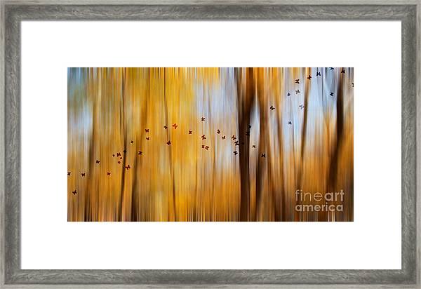 Mystic Forest Framed Print