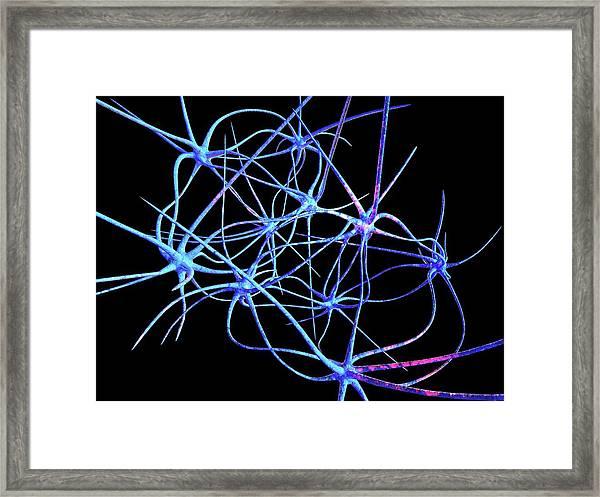 Nerve Cells Framed Print by Laguna Design