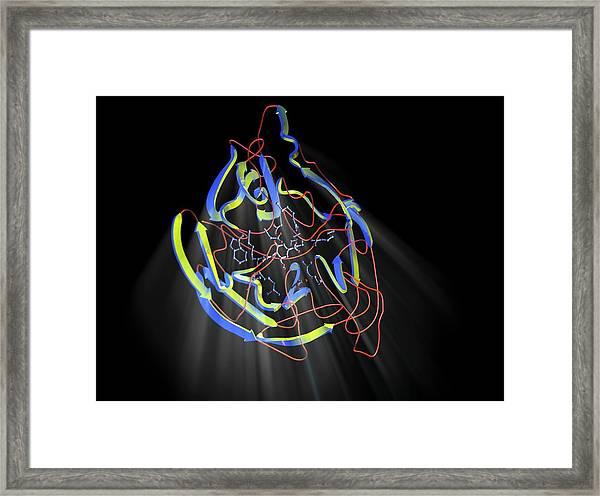 Neuraminidase Framed Print