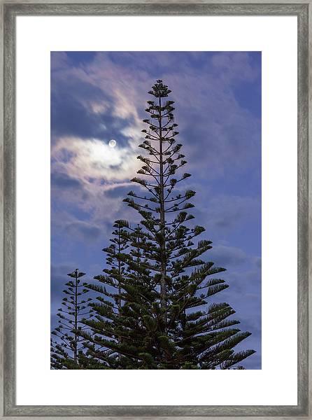 New Zealand, North Island Framed Print by Walter Bibikow