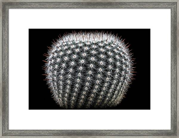 Notocactus Scopa Framed Print by Victor Mozqueda
