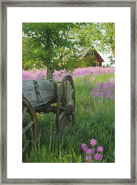 Old Buckboard Framed Print