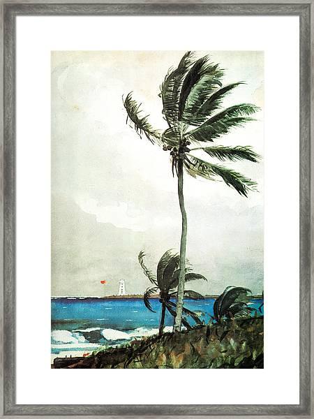 Palm Tree Nassau Framed Print