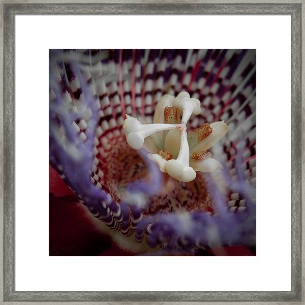 Perfect Passion Framed Print