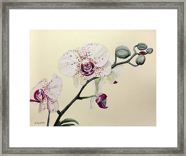 Phalaenopsis Black Panther Orchid Framed Print