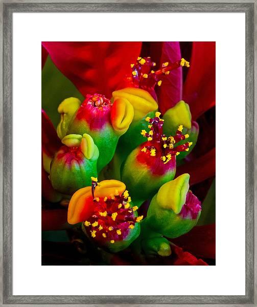 Poinsettia Flowers Framed Print