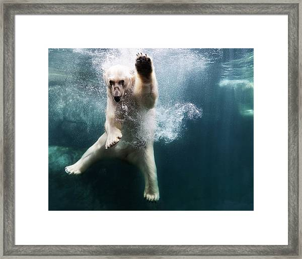 Polarbear In Water Framed Print by Henrik Sorensen