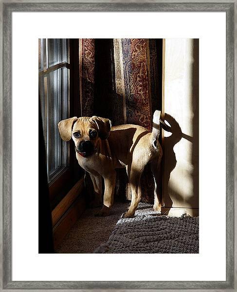 Puggle Dog Portrait Framed Print by Olde Time  Mercantile