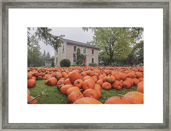 Pumpkin Farm  Framed Print