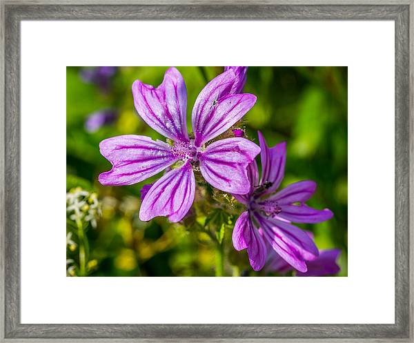 Purple Flower. Framed Print
