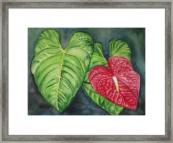 Red Anthurium Framed Print