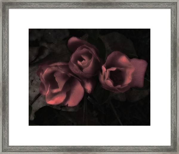 Red Bloom Framed Print