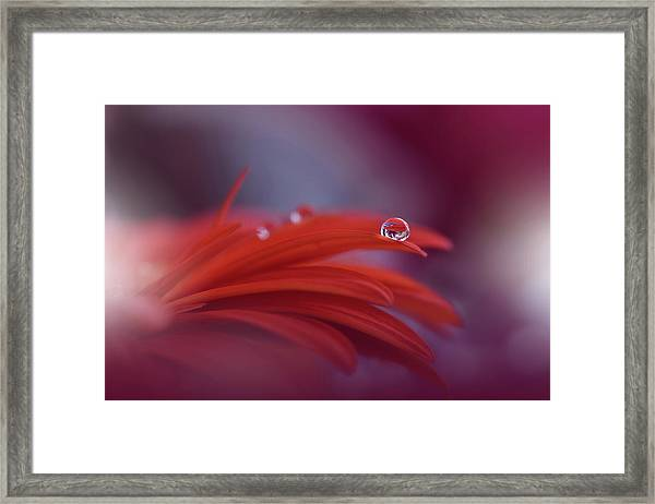 Red Passion... Framed Print