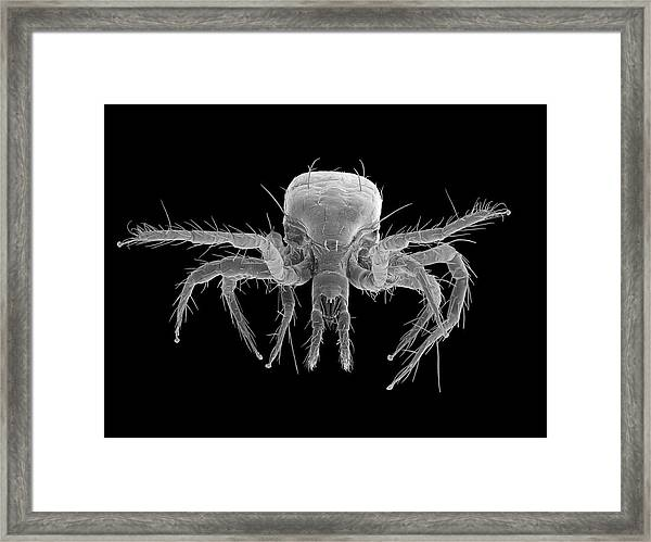 Red Spider Mite (tetranychus Telarius) Framed Print