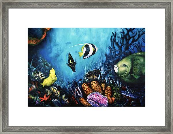 Reef Dwellers Framed Print