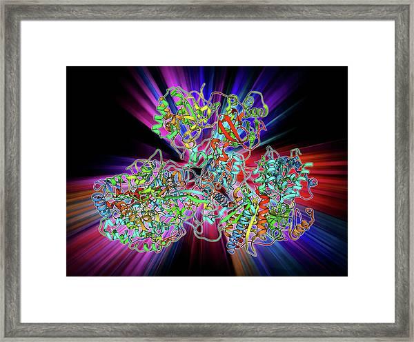 Respiratory Complex I Framed Print