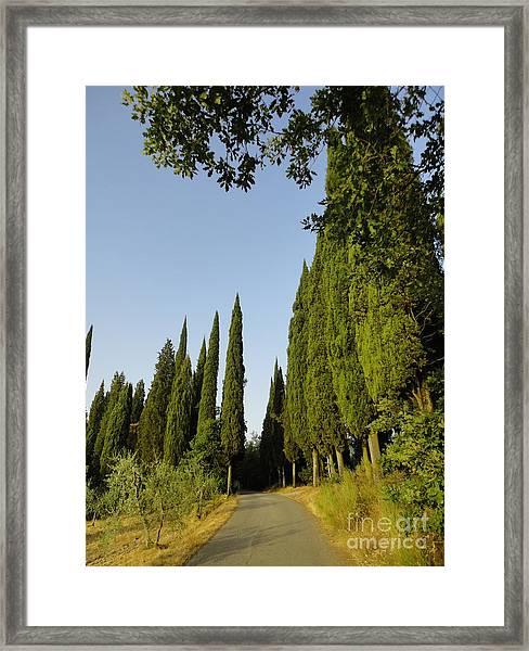Road In Loppiano Framed Print