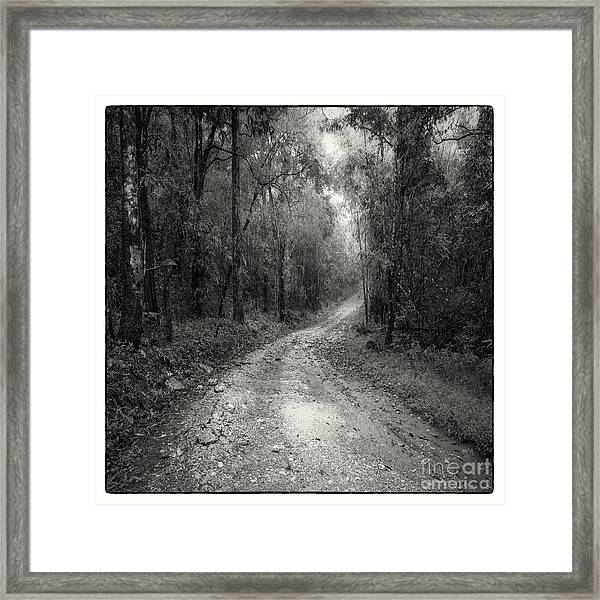 Road Way In Deep Forest Framed Print