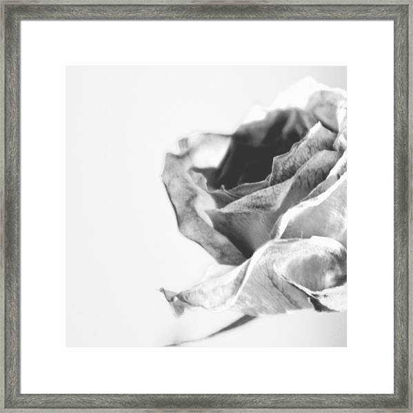 Rose I Framed Print