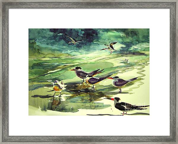 Royal Terns And Black Skimmers Framed Print