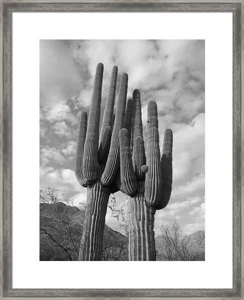 Saguaro Love Framed Print