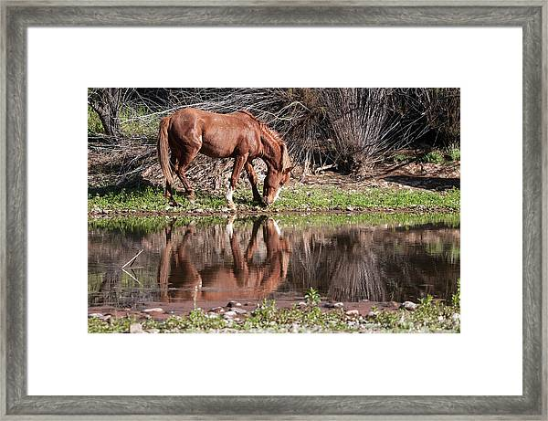 Salt River Wild Horse Framed Print