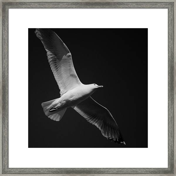 Seagull Underglow - Black And White Framed Print