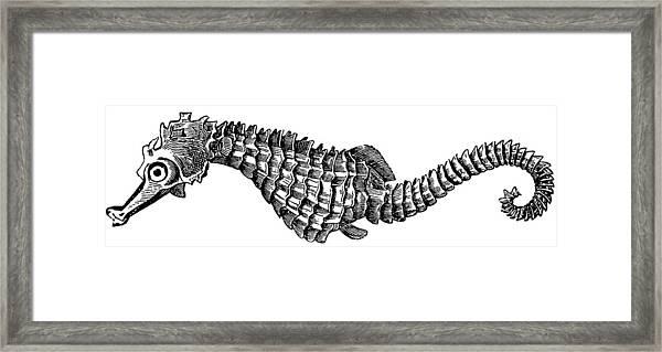 Seahorse Framed Print