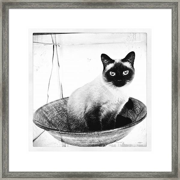 Siamese In A Bowl Framed Print