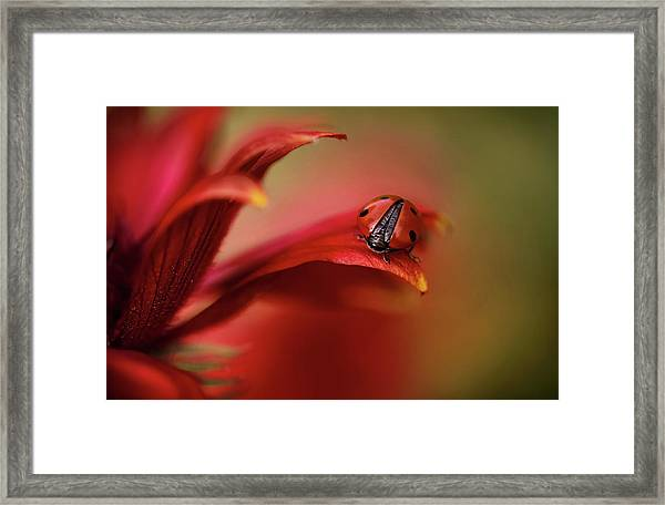 Simply Red Framed Print by Mandy Disher
