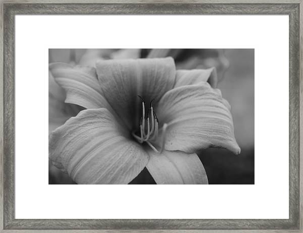 Single Spring Flower Framed Print