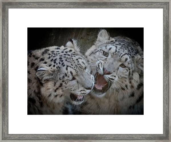Snow Leopard Cubs Framed Print