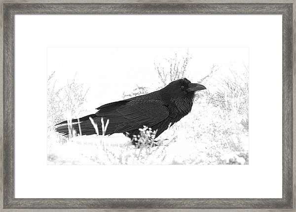 Framed Print featuring the photograph Snow Raven by Britt Runyon