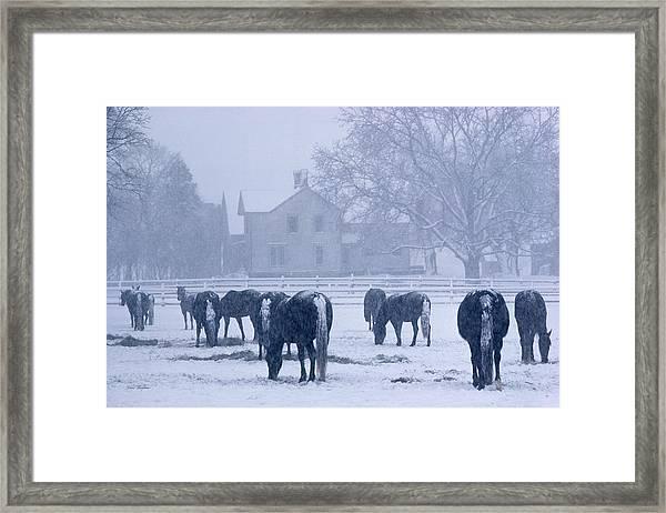 Snowfall Corral Framed Print