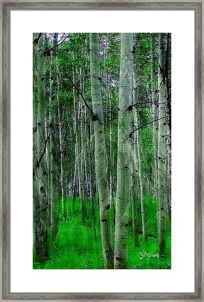 Spectacular Aspens Framed Print
