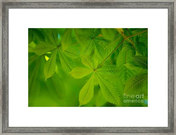 Spring Green Framed Print