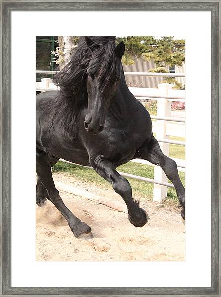 Stallion Power Framed Print