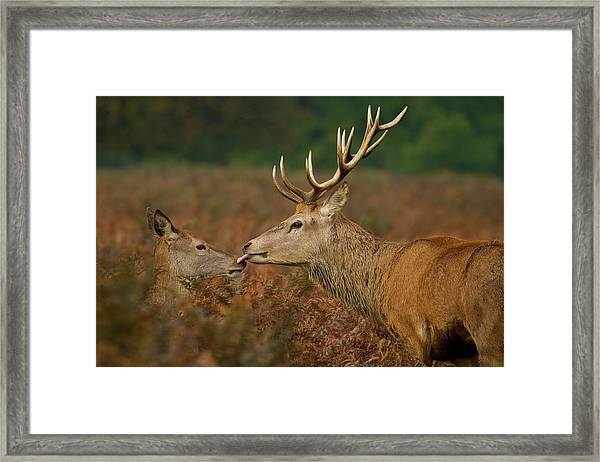Stolen Kiss Framed Print by Val Saxby