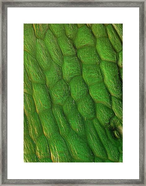 Sugar Beet Leaf Surface Framed Print by Stefan Diller