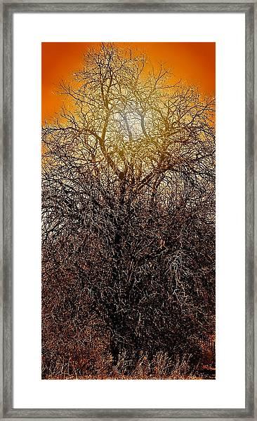 Sunburst Tree  Framed Print