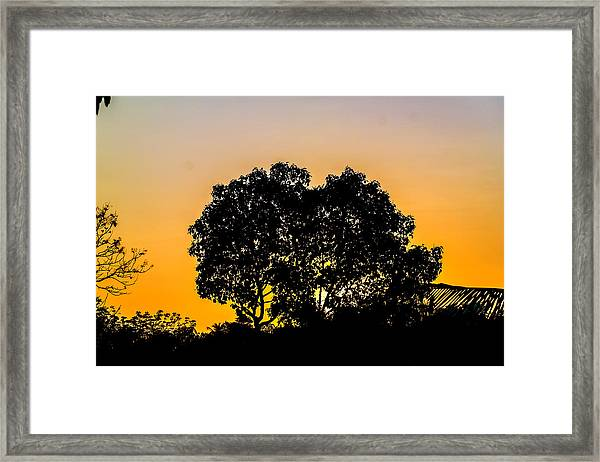 Sunset Behind Trees Framed Print