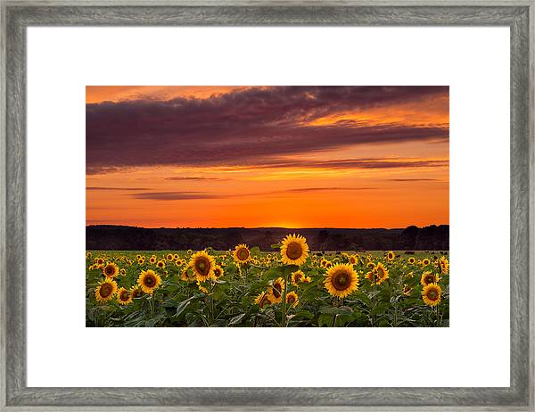 Sunset Over Sunflowers Framed Print