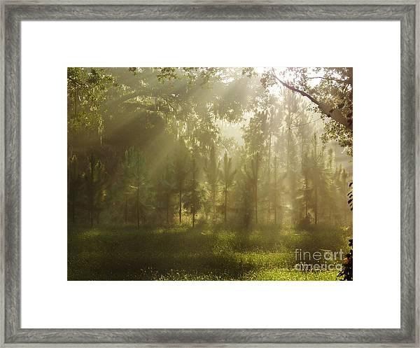 Sunshine Morning Framed Print