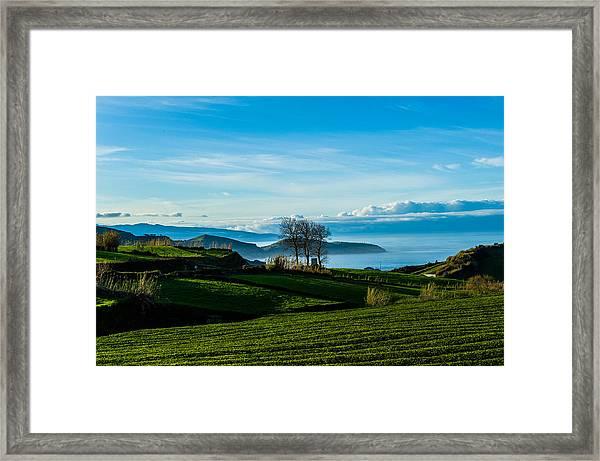 Tea Trees Framed Print