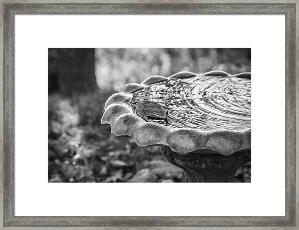 Tennessee Birdbath Framed Print