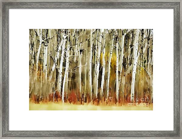 The Birches Framed Print